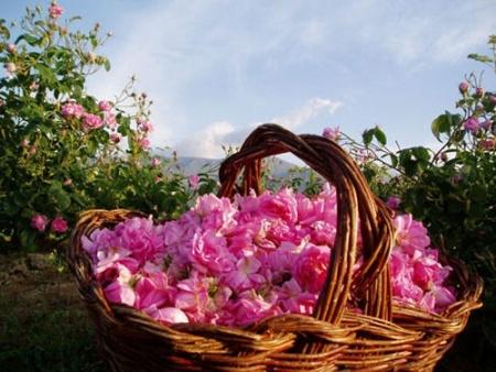 rose-cosmetics